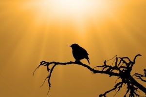 silhouette-of-the-bird-on-branch-1393351960ewv